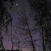 Stars Shine Through Trees