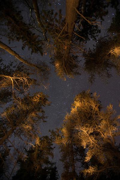 Stars Poke Through Trees