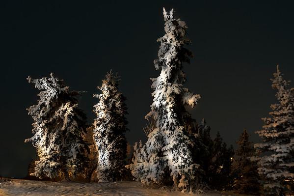 Wet Snow Sticks on Evergreens