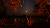Venus and the night sky from the campfire at Gomoti Camp, Botswana
