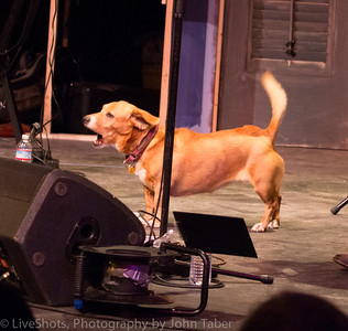 Tootsie protecting the stage from invaders. . .☮ ☮