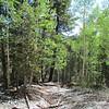 One aspen grove on the Bristlecone Trail.