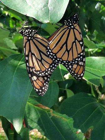 Norfolk Botanical Gardens & Butterfly House