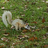 White Squirrel on Brevard College Campus