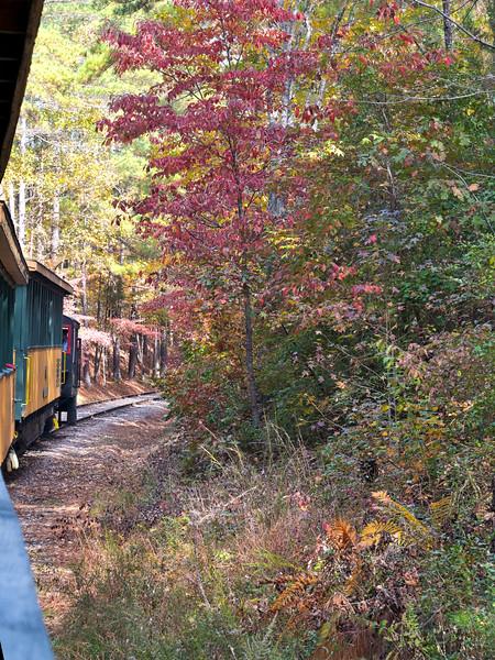 New Hope Valley Railroad Steam Locomotive pulls tourist train through foliage