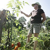 The Salem Community Gardens have been wildly popular and have a waiting list for plots.  Lisa Spence, a co-founder of Salem Community Gardens, talks about several of the plants growing in the various plots in the Mack Park garden. Photo by Deborah Parker/August 19, 2009<br /> <br /> <br /> , The Salem Community Gardens have been wildly popular and have a waiting list for plots.  Lisa Spence, a co-founder of Salem Community Gardens, talks about several of the plants growing in the various plots in the Mack Park garden. Photo by Deborah Parker/August 19, 2009
