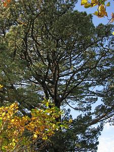 Bodnant Gardens - October 2009 115 SM