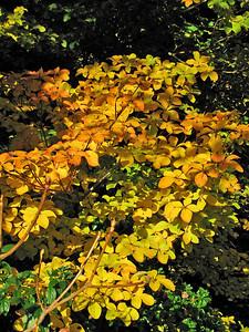 Bodnant Gardens - October 2009 095 SM