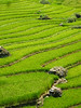 terraced rice paddies in sapa
