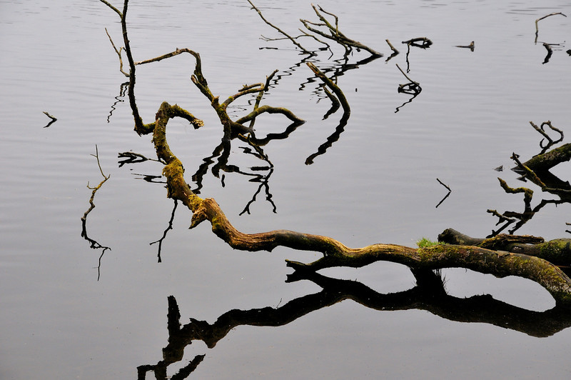 Branches in Hillsborough Lake.
