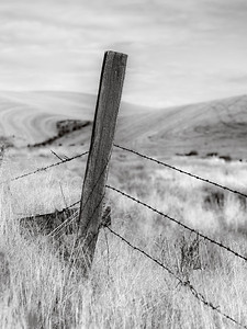 Fence post in the Palouse, SE Washington State.