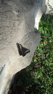 At the butterfly center at the Houston Museum of Natural Science