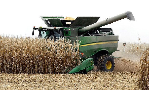 Tom Delph nears the end of his corn harvest Monday as he cuts this field along County Road 400W between CR 500 & 600N near Frankton Monday afternoon.  Delph had about 150 acres left out of the approximately 1250 acres of corn he planted.