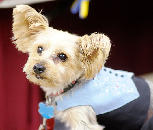 Don Knight/The Herald Bulletin<br /> Yorkshire Terrier rescue Cracker Jack models clothes made by his owner Jane Fero at her booth during the Madison County Humane Society's Holiday Craft Fair at the Rangeline Community Center on Saturday. The event continues today.