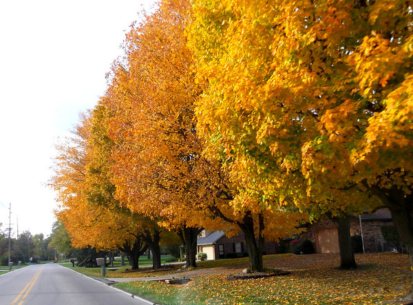 A drive on West 8th Street is looking really pretty.<br /> <br /> Photographer's Name: Harry Kirchenbauer<br /> Photographer's City and State: Anderson, Ind.