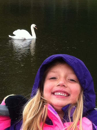 """My granddaughter Lilly McIntyre adores this lovely bird at Shadyside Lake that she has dubbed """"Snow White."""" We visit every day after school and when the bird sees us she swims right to us!<br /> <br /> Photographer's Name: Tina Snyder<br /> Photographer's City and State: Anderson, Ind."""