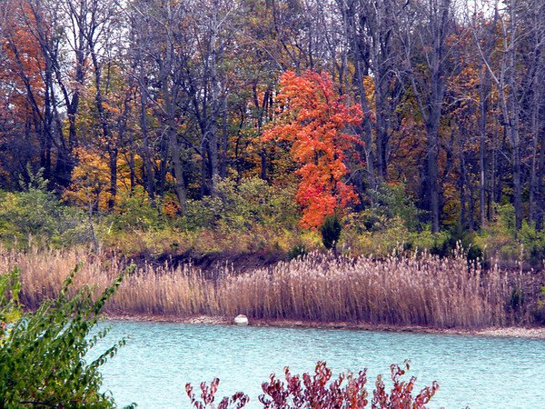 Fall is beautiful; taken just north of Anderson.<br /> <br /> Photographer's Name: Rita Drews<br /> Photographer's City and State: Anderson, Ind.