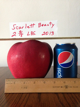 A scarlet beauty: Two pounds, six ounces, taken from our backyard.<br /> <br /> Photographer's Name: John  Barton<br /> Photographer's City and State: Anderson, Ind.