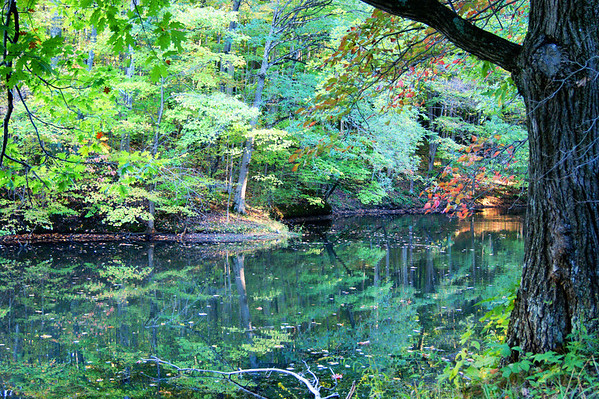 The pond at Shades State Park.<br /> <br /> Photographer's Name: Morgan Elbert<br /> Photographer's City and State: Alexandria, Ind.