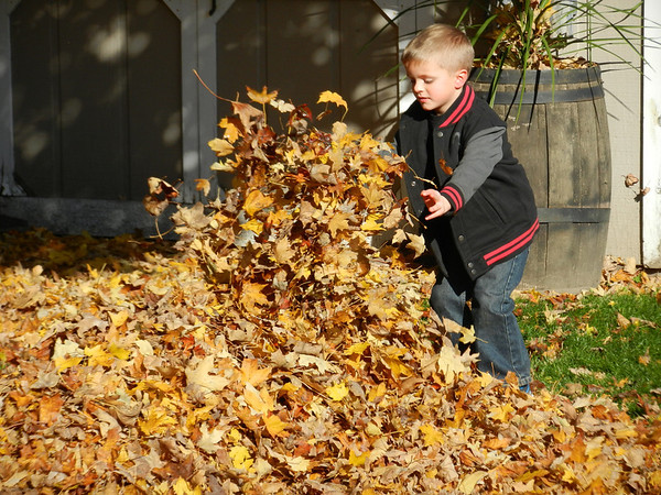Kylan Adams piled up the leaves at Grandma & Papaw's house in Frankton.<br /> <br /> Photographer's Name: Diana Adams<br /> Photographer's City and State: Frankton, IN