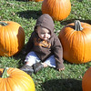 Sullivan picking out his pumpkin.<br /> <br /> Photographer's Name: Shannon Kemper<br /> Photographer's City and State: Anderson, IN
