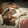 Nueve cat green yellow eyes-6