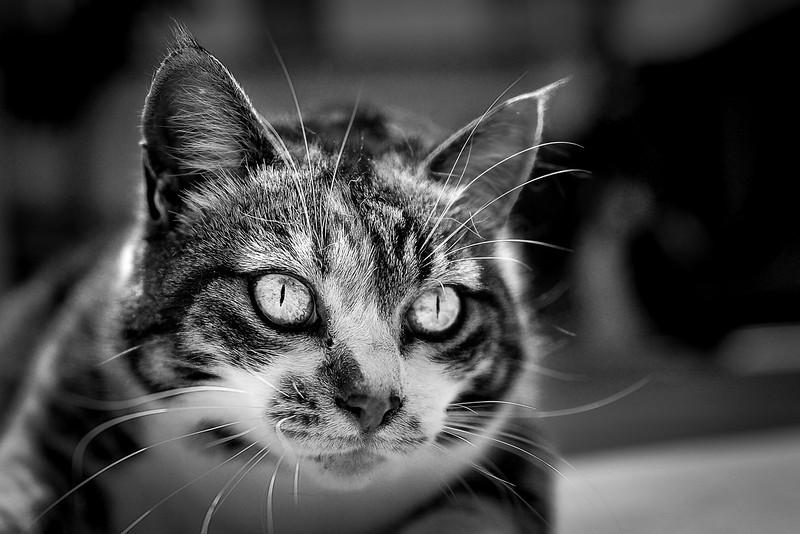 Nueve cat green yellow eyes-4-3