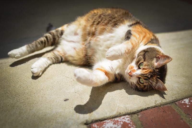 Nueve cat green yellow eyes-5