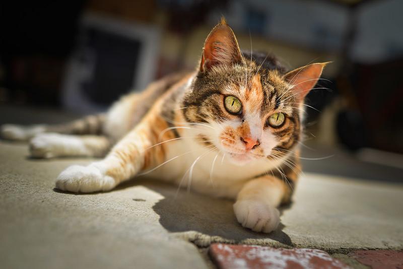Nueve cat green yellow eyes-4