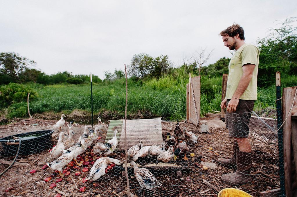 Counter Culture founding farmer Rob Barreca checks in with the ducks on his North Shore farm early morning.