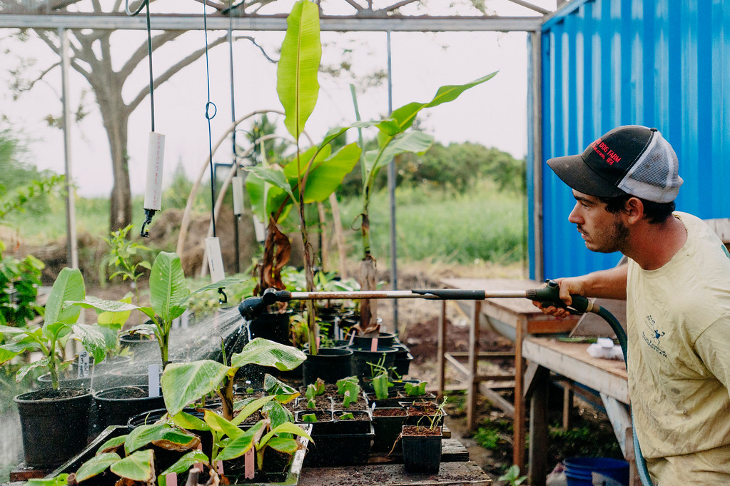 Gabe Sachter-Smith tends to his bananas and other plants in the nursery at Counter Culture.