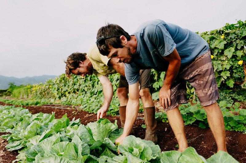 Counter Culture founder Rob Barreca, left, and Daniel Leas, right, tend to vegetables on the North Shore farm.