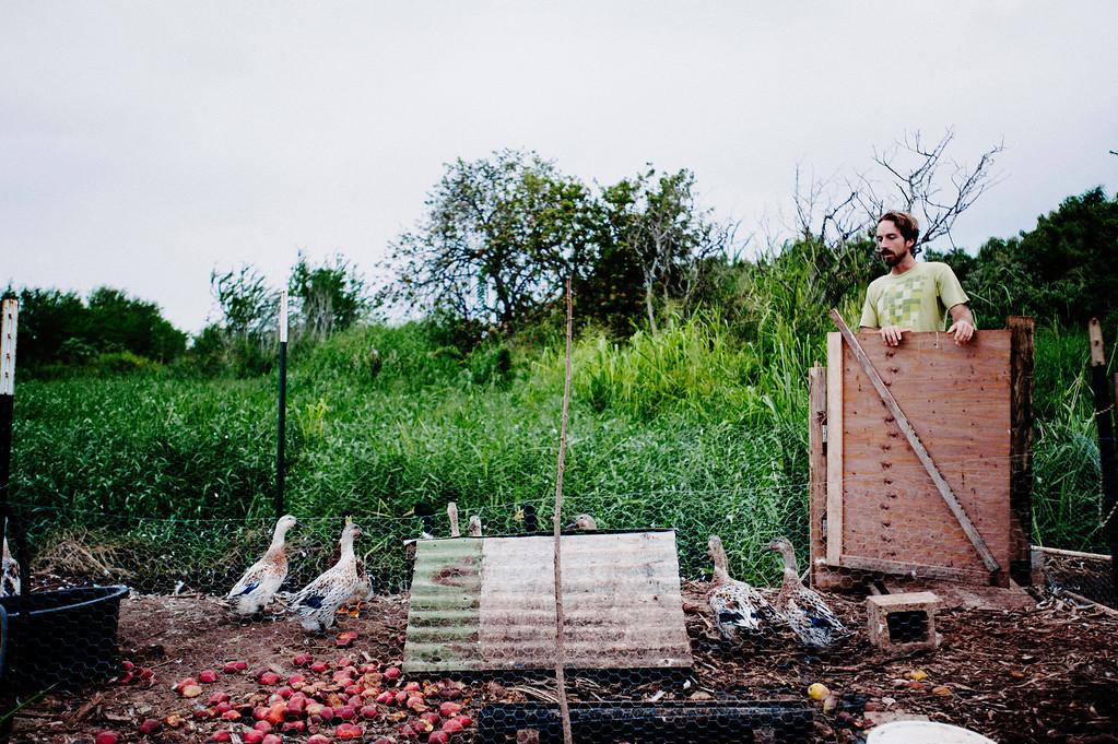 Counter Culture founding farmer Rob Barreca checks in with the ducks on his North Shore farm early morning.