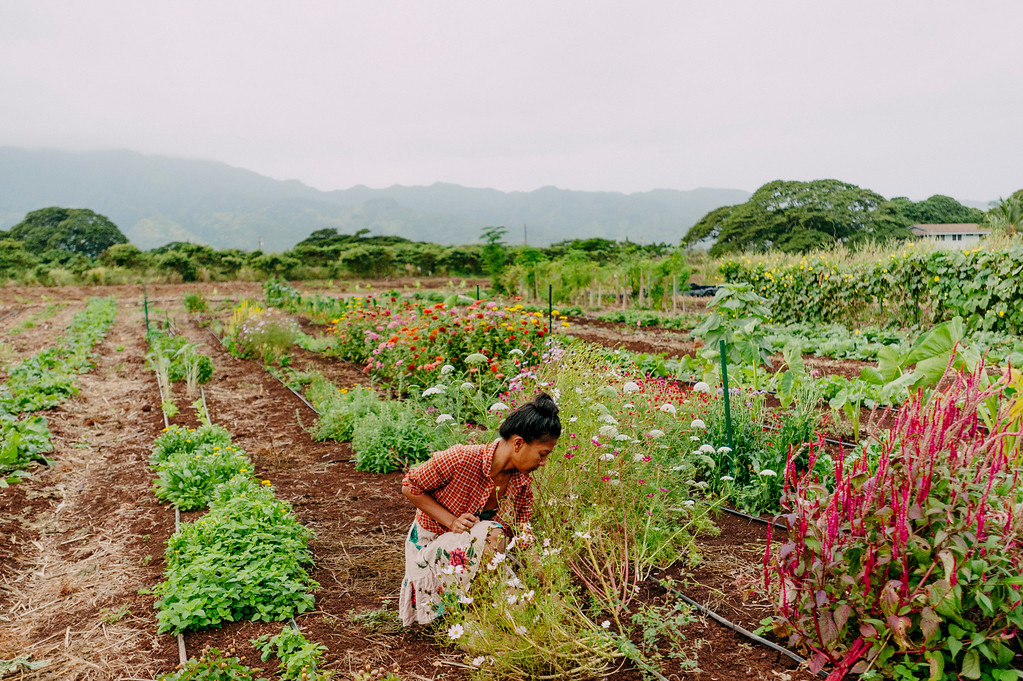 "Counter Culture farmer Laarni Gedo gets to work early morning on the farm. Gedo's project is ""slow flowers"". She is selling fresh flowers grown on the Oahu farm."