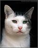 """""""CAT 8""""."""