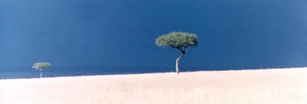 STROM COMMING & TREE, Kenya