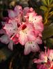 smudge floral