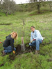 Amy and Stuart attend to an oak on the east side of Shell Ridge.