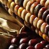 Indian Corn, Fall, Halloween, Harvest