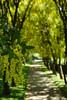 2006-06-11. Botaniska trädgården. Botanical garden. Göteborg. [SWE].