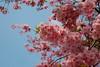 2006-05-07. Botaniska trädgården. Botanical garden. Göteborg. [SWE].