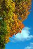 2008-10-06. Höst, PR-färger / Autumn, PR-colours [SWE]