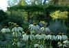 2008-08-01. Göteborg Botaniska trädgård / Göteborg Botanical garden [SWE]