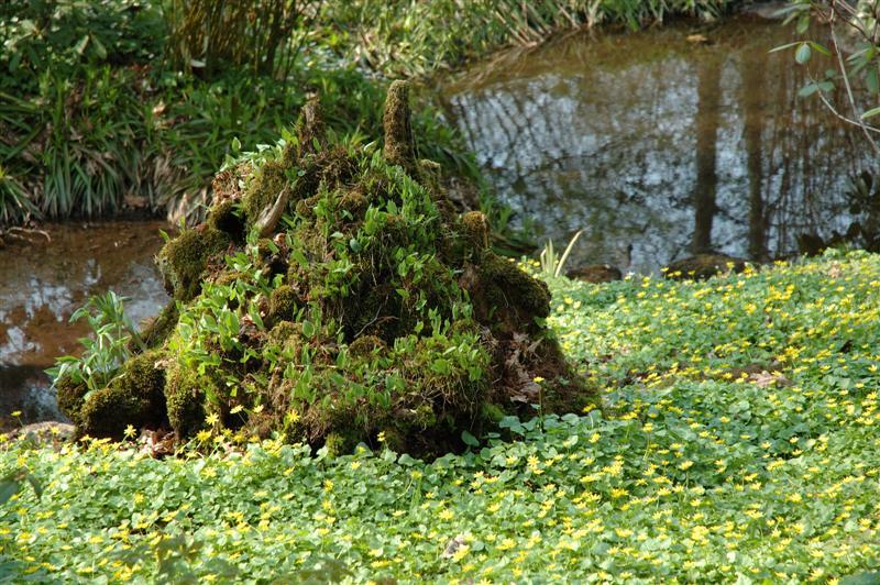 2006-05-07. Totoron i Botaniska Trädgården(Göteborg) [SWE] / The Totoro in the Botanical Garden(Goteborg) [SWE]