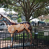 Ocala Horse Fever