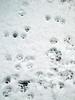 Annie's first snowfall