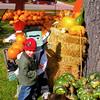 Pumpkin Pickin' - 03