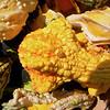 Pumpkin Pickin' - 10