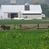 Amish baling the hay