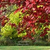 Even a Mounds Park picnic table looks good with a colorful maple tree for a frame.<br /> <br /> Photographer's Name: Art Tate<br /> Photographer's City and State: Anderson, IN
